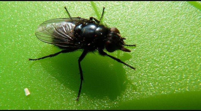 P che la mouche naturelle truites compagnies - Salon de la peche a la mouche ...