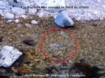 La zone de frai se trouve en bordure de rivière