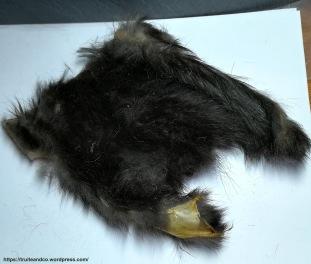 Peau d'écureuil noir